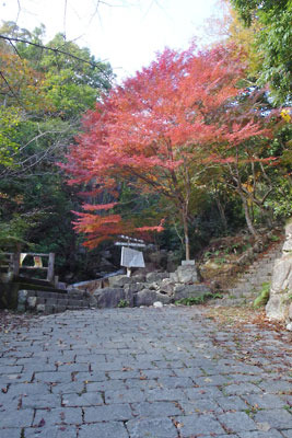 楊梅の滝の入口と紅葉,車道終点
