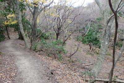 涼峠とヤケ山間の道脇に現れた水源・湿地跡