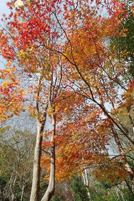 山の紅葉,涼峠とヤケ山間道上にて