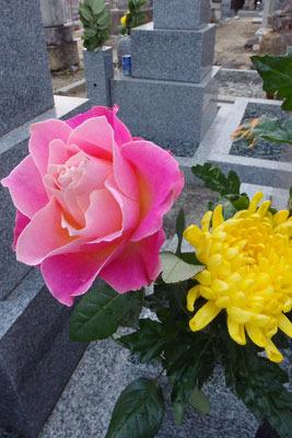 墓所お供えのピンクの薔薇と菊