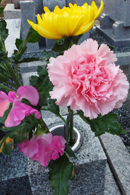 墓地お供えのカーネーションや菊等