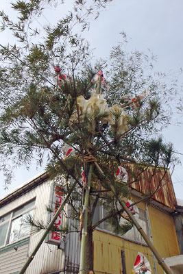 福井県勝山の旧町家域に立てられた左義長祭の竹飾り