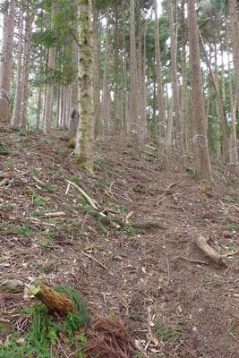 平(だいら)から皆子山へ続く急坂の道