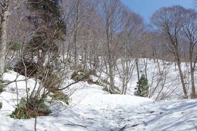 日野山の比丘尼転がし上部で山頂直下の雪原