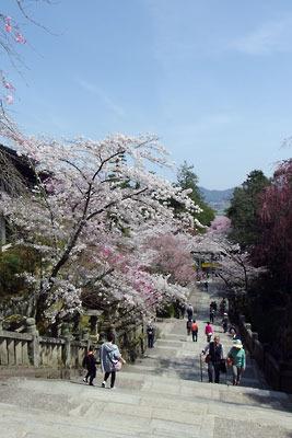 金刀比羅宮の石段参道と桜