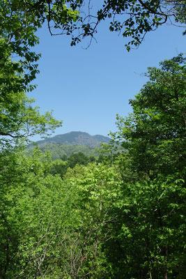 瓜生山山頂付近から見た比叡山