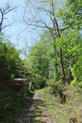 曼殊院近くの薬草園内に通じる下山路