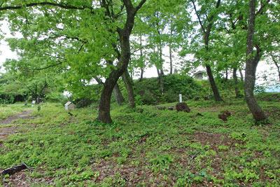 福井県内陸部・勝山郊外にある村岡山城址の広場からみた主郭