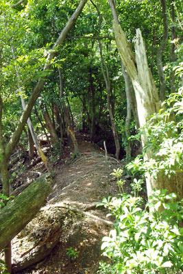 京都市街東部・北山科山中にある安祥寺上寺跡から山頂へと続く尾根と古道
