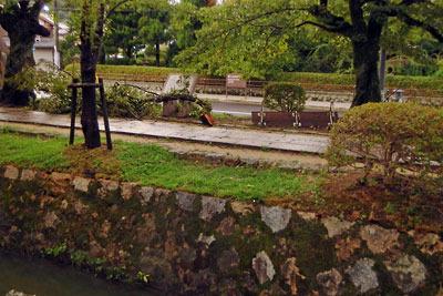 平成30年台風21号により折れた京都「哲学の道」の桜と倒れたベンチ