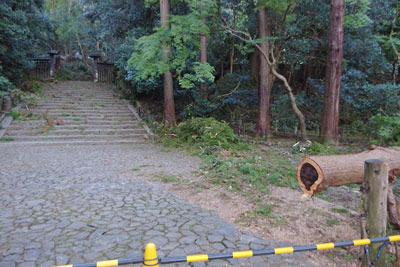 平成30年台風21号による倒木のある京都・法然院の門前