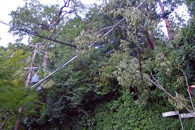 平成30年台風21号の風で折れ倒れた枝が寄りかかる京都・法然院横の電線