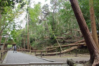 境内に倒木が横たわる、2018年台風21号で罹災して4週弱後の法然院