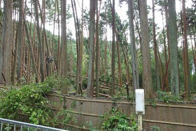 台風21号による銀閣寺境内林の倒木被害