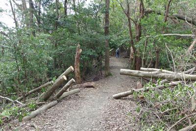 台風21号による大文字山登山道の倒木の切断箇所