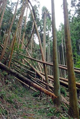 平成30年台風21号による、京都・大文字山傍の鹿ケ谷道(如意越)の倒木