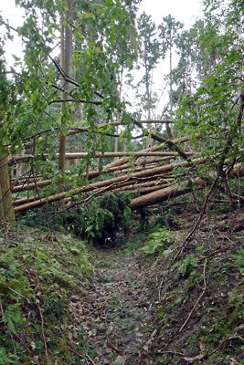 如意越道で遭遇した台風21号の倒木による「絨毯爆撃」
