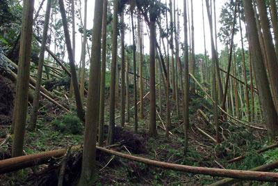 京都・大文字山中にある如意越途中の戦国土塁付近の平成30年台風21号による被害状況