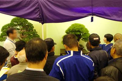 京都市街東部の「みやこめっせ」で開かれた「第38回日本盆栽大観展」で盆栽解説ツアーを行う、講師氏と川崎仁美さん