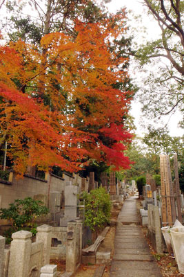 京都市街東部にある黒谷(紫雲山)山上墓地の紅葉
