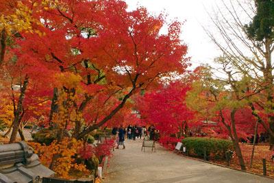京都市街東部にある永観堂境内の燃える紅葉