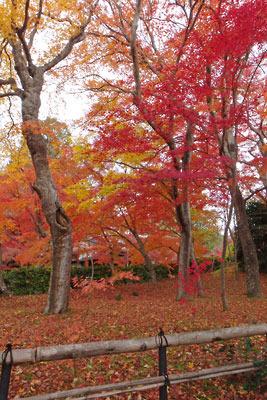 京都市街東部にある真如堂の三重塔西側の紅葉