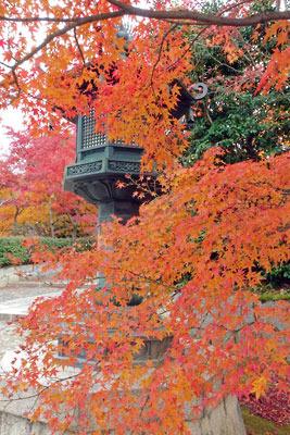 京都市街東部にある真如堂の参道坂下の紅葉