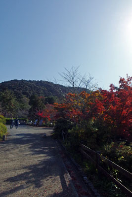 陽を受ける紅葉ある京都・円山公園