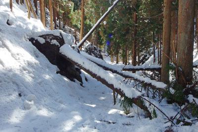 京都市街北部の山上集落「芹生」北の、三ノ谷の道を塞ぐ倒木と雪