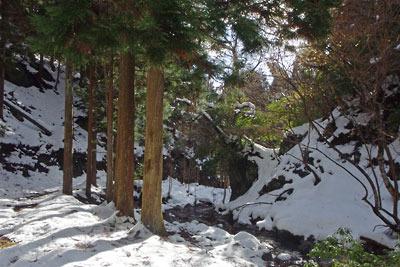 樹下の雫が光る、京都市街北部の山上集落「芹生」北奥の雪道
