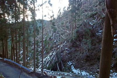 平成30年台風21号による、京都市北部・芹生峠の凄まじい倒木被害