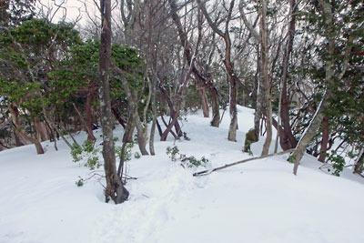 京都・雲取山頂部から北へ続く尾根上の踏み跡