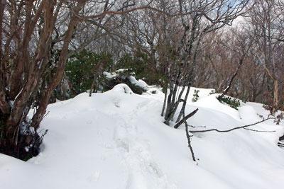 雪中に灌木繁る、京都・雲取山後峰