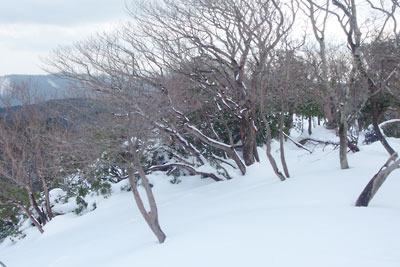 枯木のたうつ、京都・雲取山北峰頂部