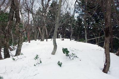 雪中灌木が繁る、京都・雲取山前峰の頂