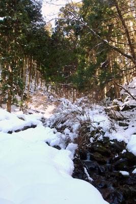 沢か道か判別不能の、京都市街北部山中の花脊古道