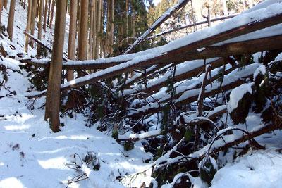 道も沢も全てが倒木と土砂で埋め尽くされた、京都市街北部山中の花脊古道