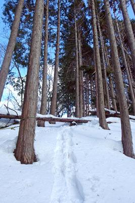 京都市街北部山中にある旧花背峠の東から続く稜線ルートの山道とスノーシューの跡