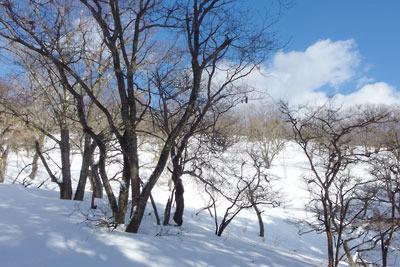 京都市街北部山中の旧花背峠と新峠を結ぶ稜線近くの伐採雪原