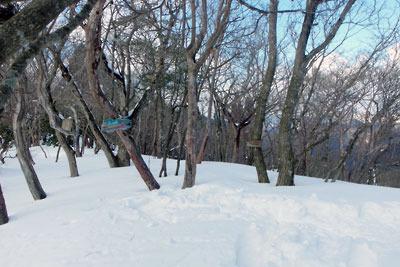 京都盆地北縁山地にある、雪深い天狗杉山頂