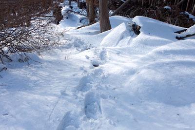 京都盆地北縁山地にある、花脊峠に続く標高約810mピーク西側の雪深い登坂稜線