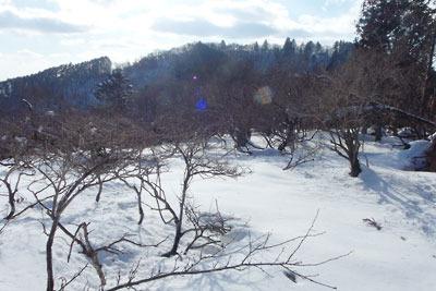 雪と灌木に覆われた、京都盆地北縁山地の天狗杉(山名)東方の標高約810mピーク