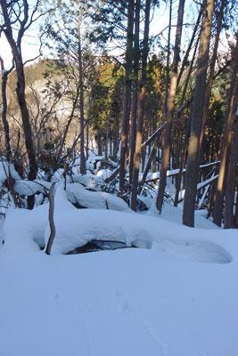 雪深く、倒木も多いため進み辛い、京都盆地北縁山地の標高約810m頂東側稜線