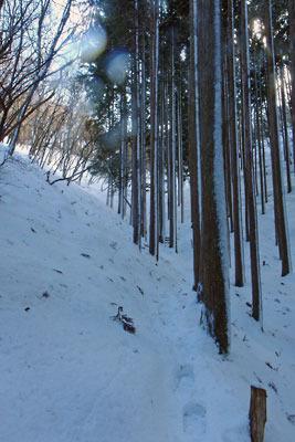 京都盆地北縁山地にある、花脊峠北側の緩やかな植林谷