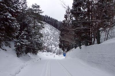 周囲全てが雪で覆われる、京都盆地北縁山中にある芹生峠