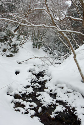 京都・雲取山直下の三ノ谷支流の雪景色