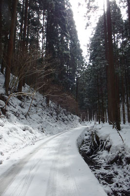 氷雪に覆われた、京都盆地北縁山中の芹生峠北側の車道