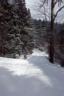 京都盆地北縁山中にある、雪深い芹生奥の林道