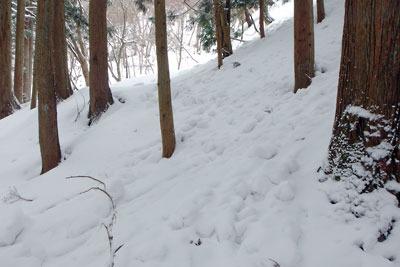 京都・雲取山主峰直下の谷なかの雪崩の跡