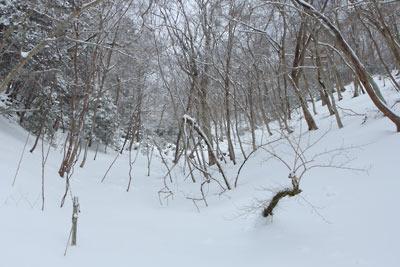 灌木の雪原と化す、京都・雲取山主峰直下の最後の急登区間